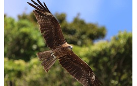 Image of a an eagle taken with the Canon EOS 7D Mark II digital SLR camera